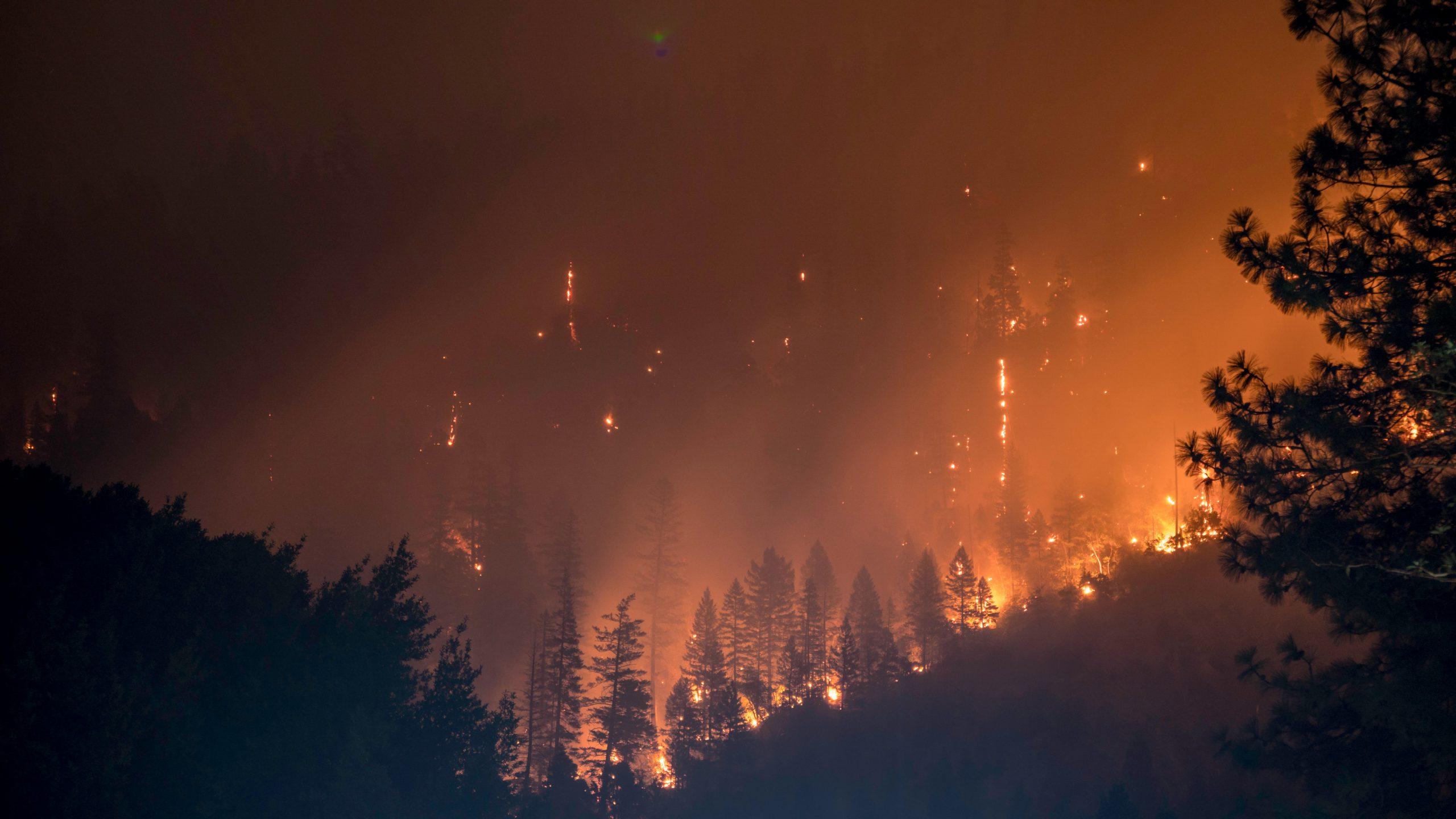 ¿Cómo ha afectado los incendios del 2019 a las Islas Canarias?