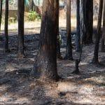 Lacra medioambiental. Los incendios y la deforestación