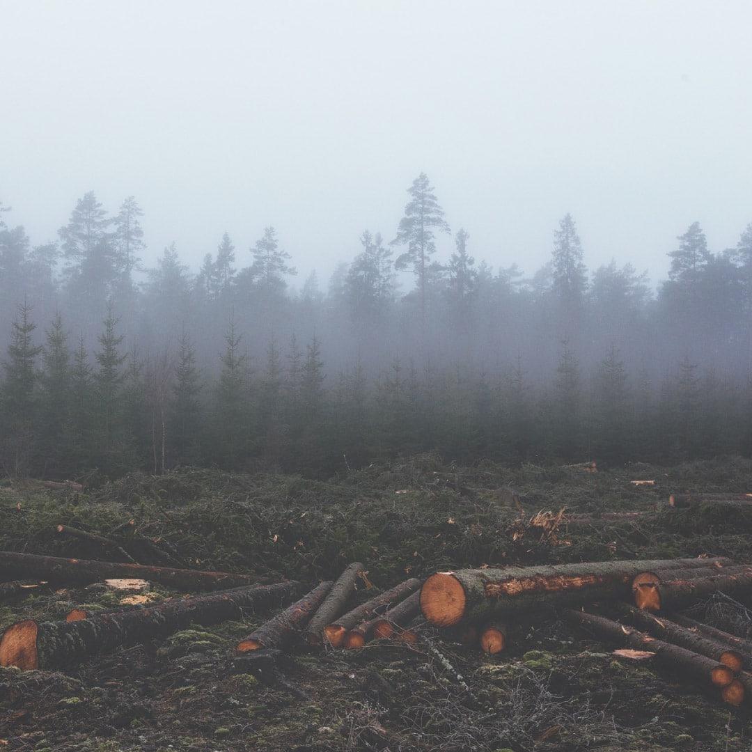 Aumento de la plantación y tala de árboles en Europa