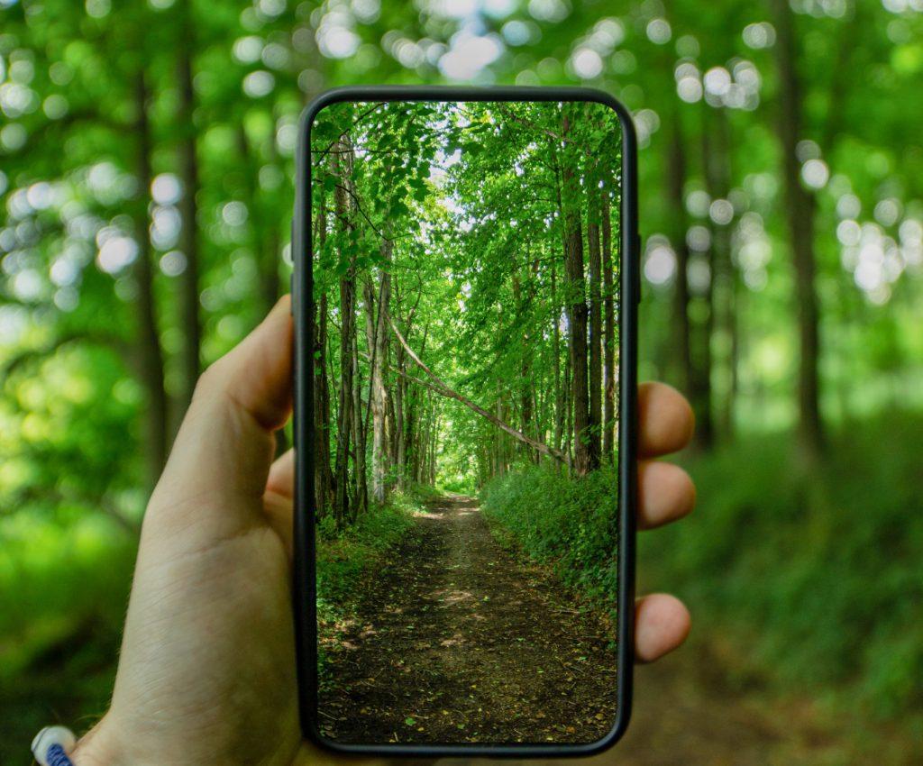 foto sacada con el movil a un bosque